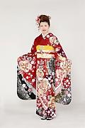 1783 赤系 古典桜、梅可憐な花々 tt-fr2301 サムネイル